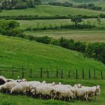 "Pecorino Toscano, one of Italy's greatest examples of ""terroir"""